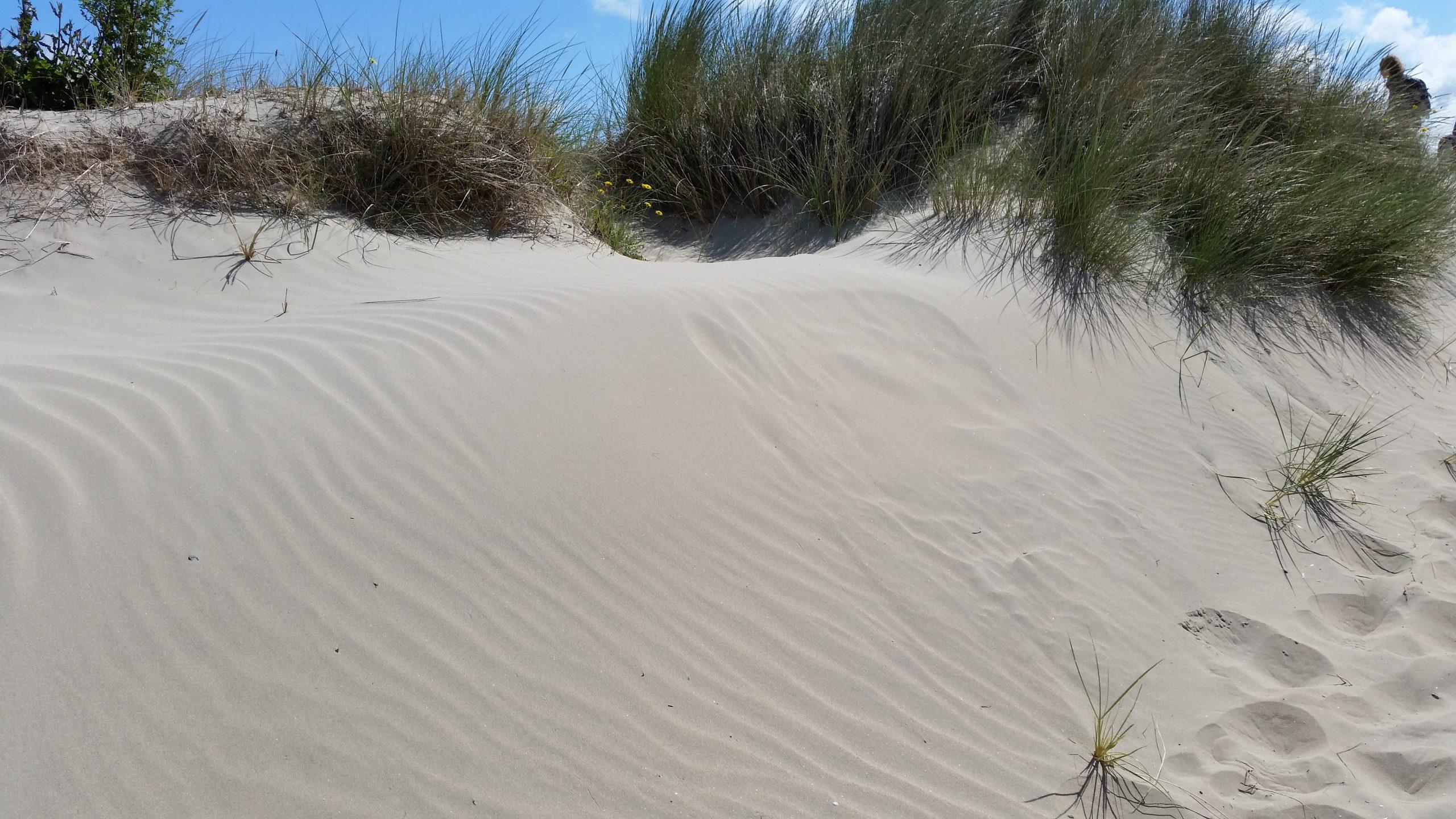 Embryo dunes