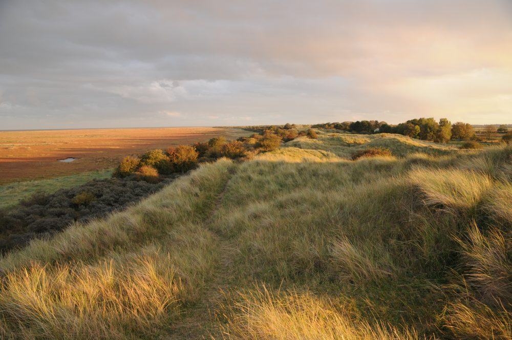 Saltfleetby dunes looking south HERO