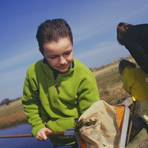 A small boy in a green fleece shows off the creatures in his net whilst pond dipping in the dune slacks on a sunny day