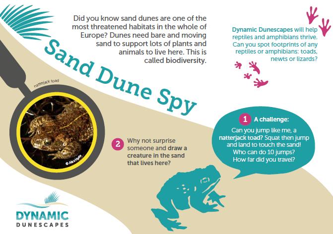 sand spy