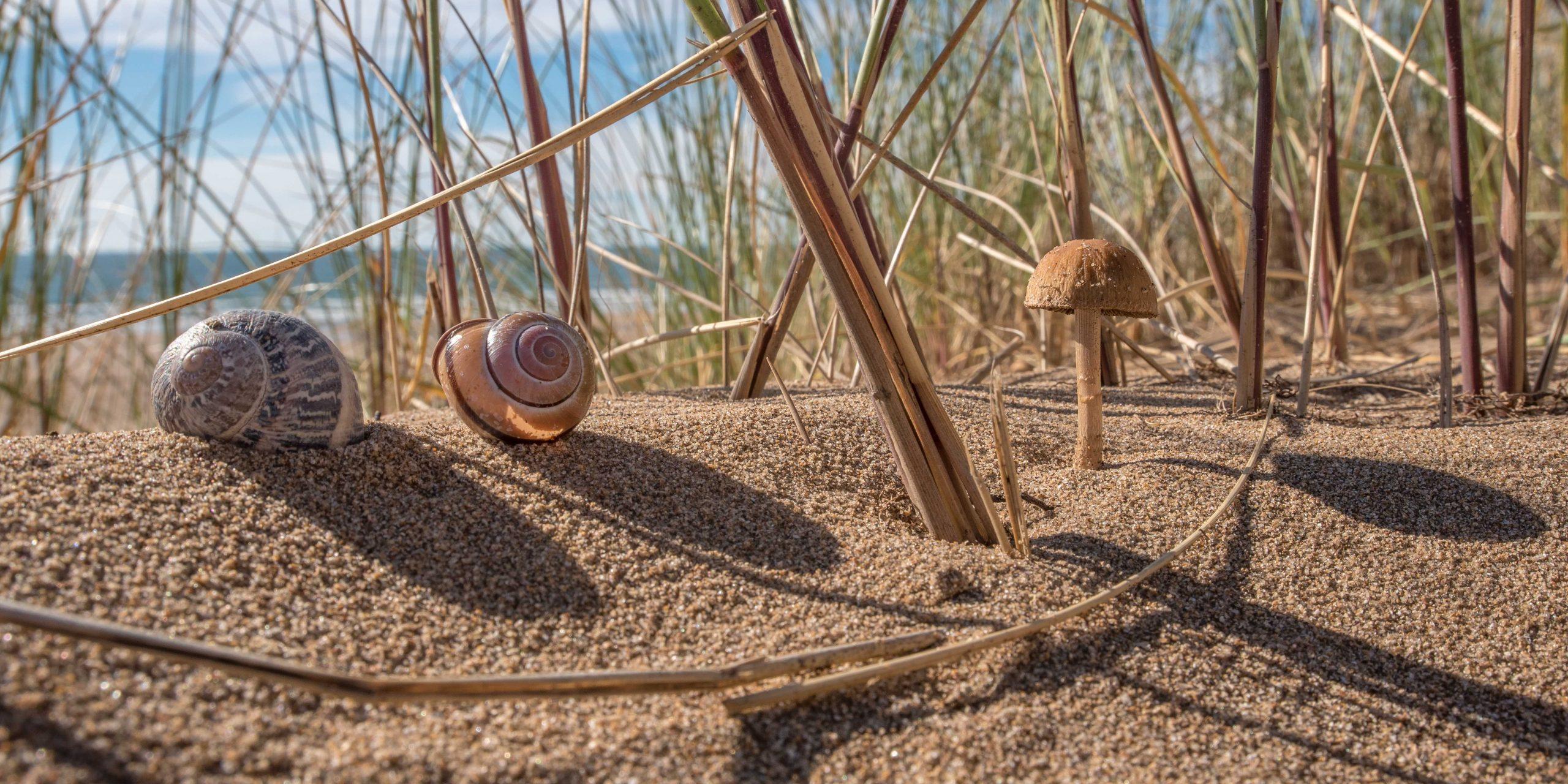 Dune Mushroom with Shells