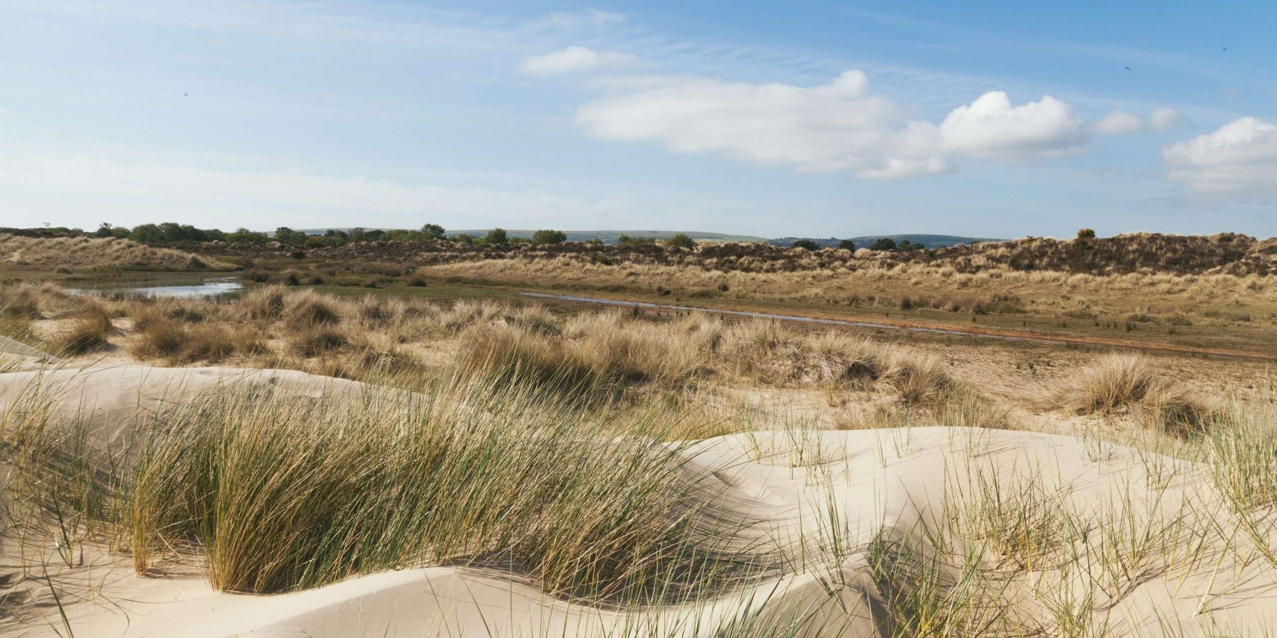panorama of sandy dunes at studland bay in the soft sunshine