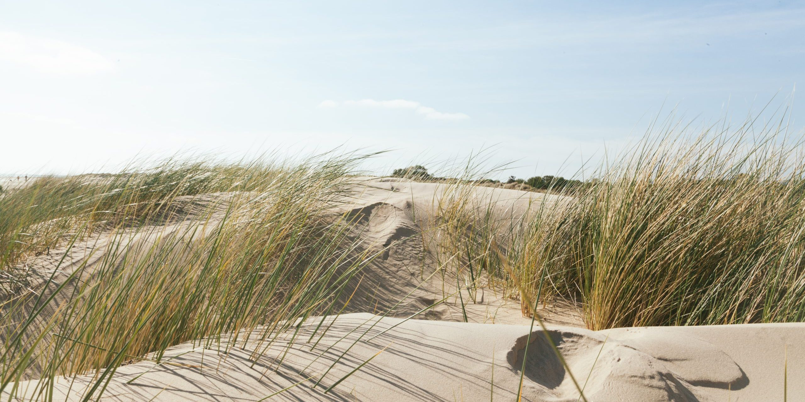 footprints in the tops of small sandy dunes