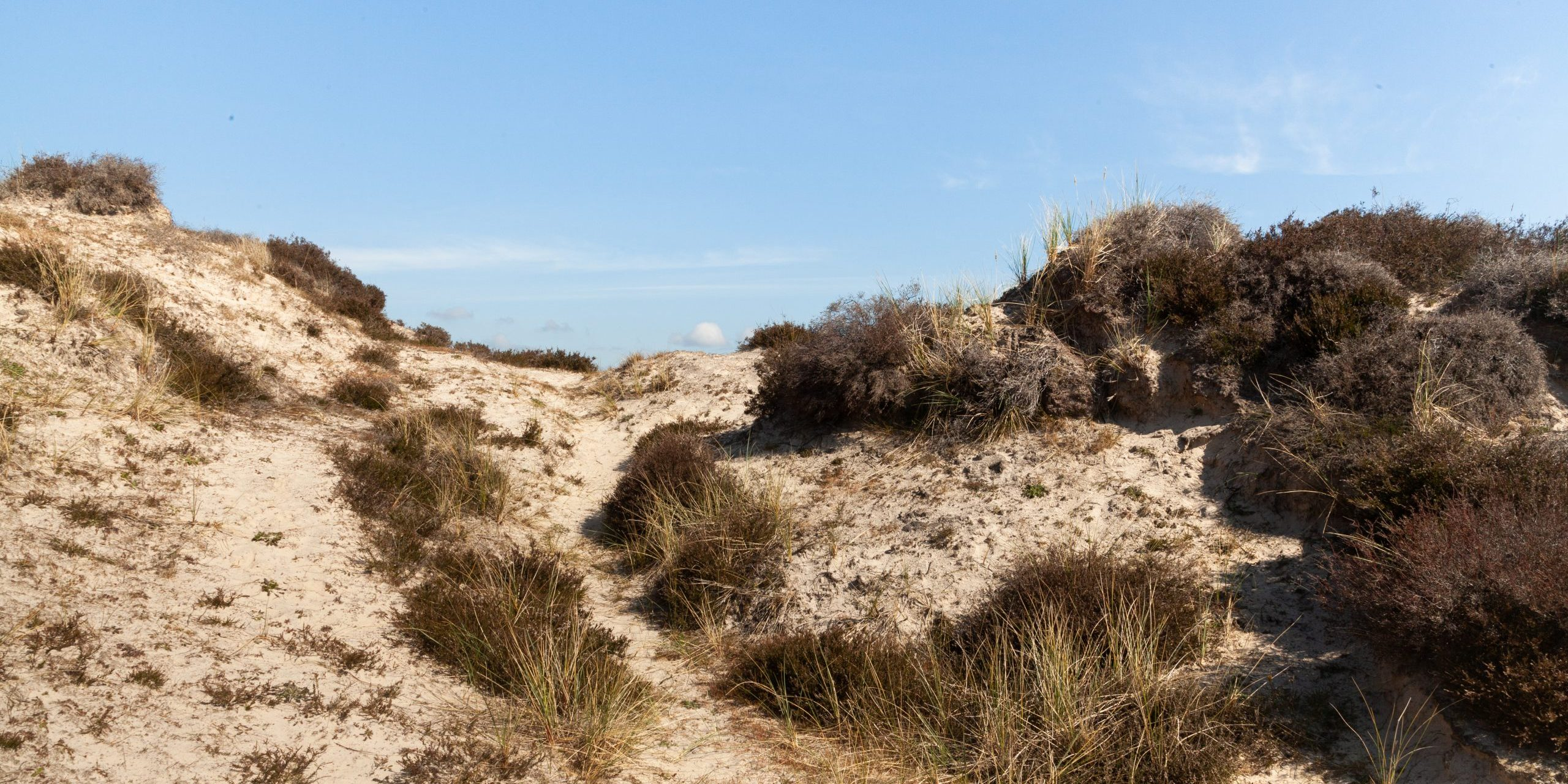 Pathways visible in the dunes at studland bay