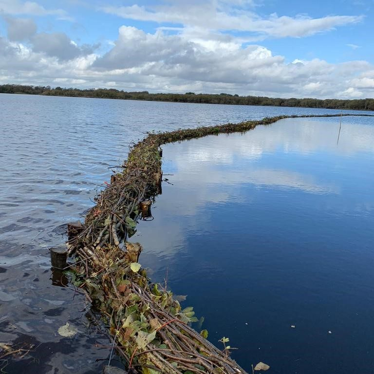 Fish defences in little sea lake