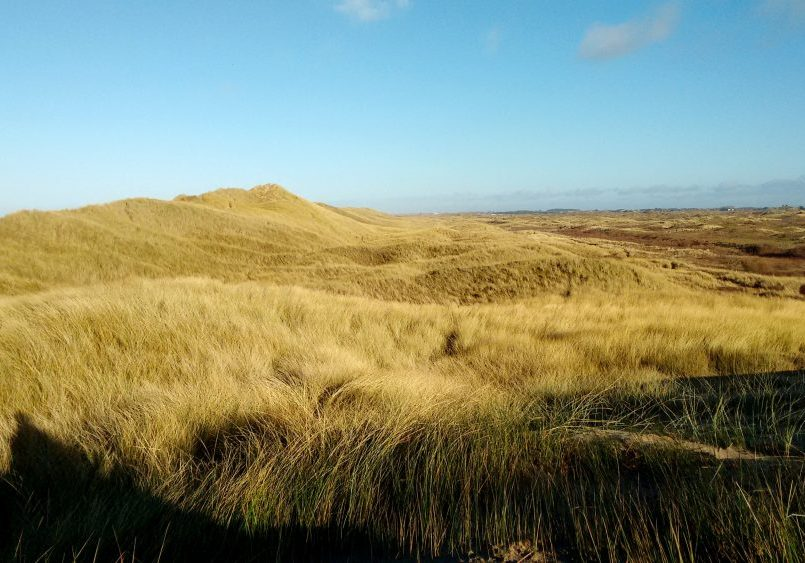 Mature stabilised dunes