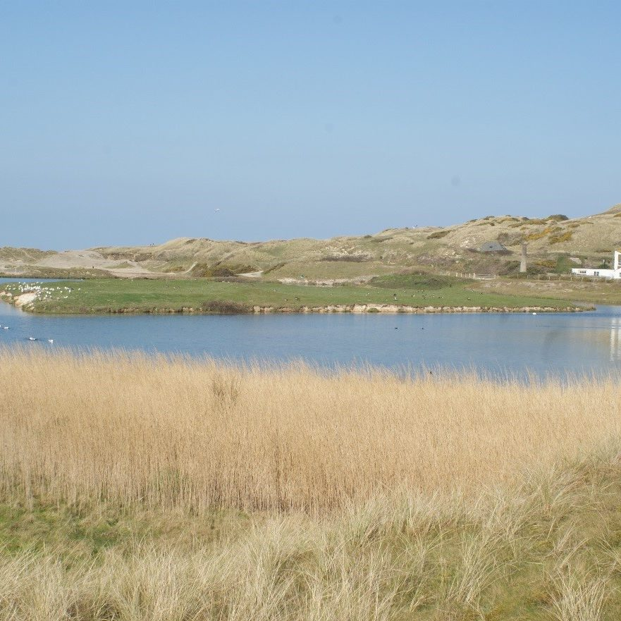 A lagoon with reeds and birds