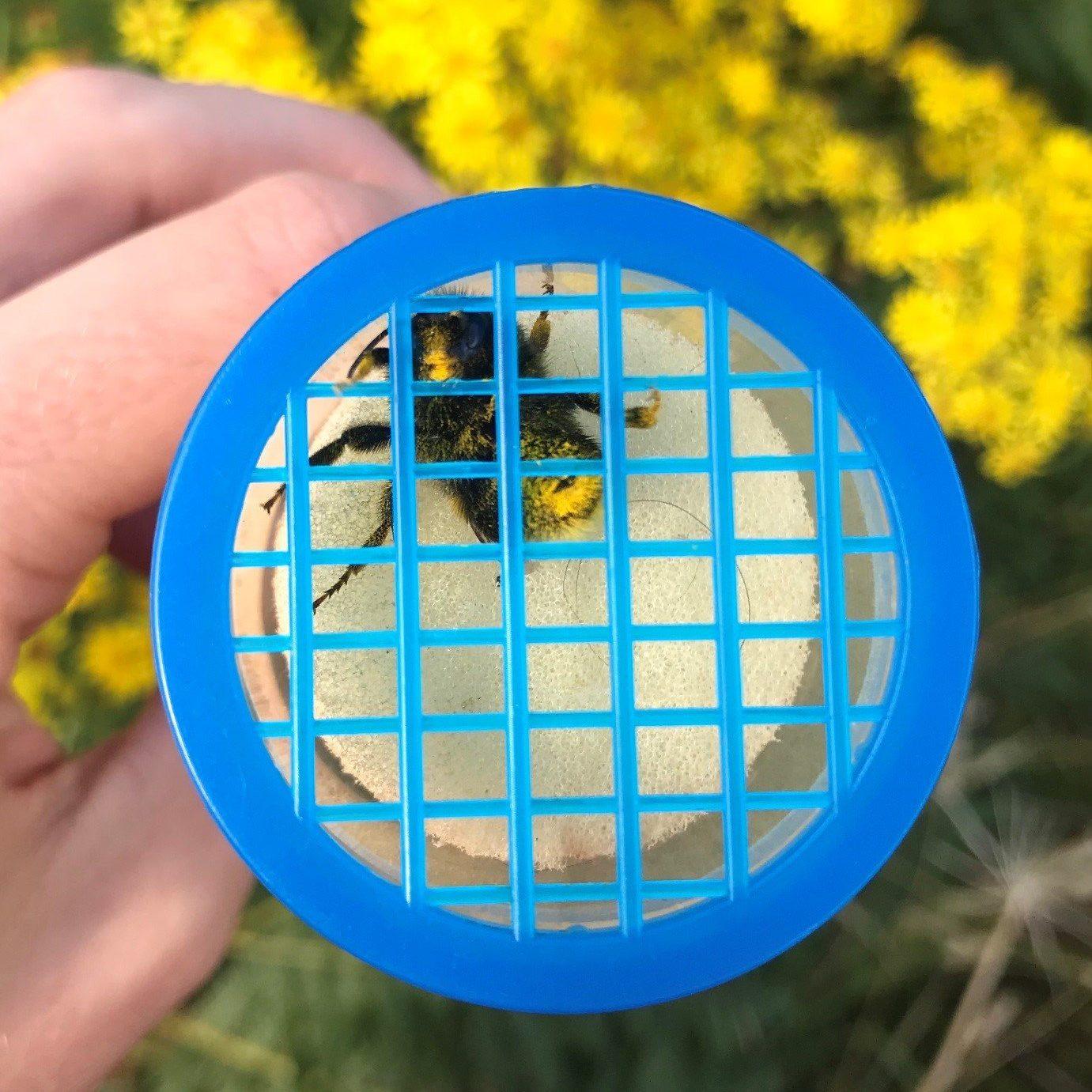beth bees 1