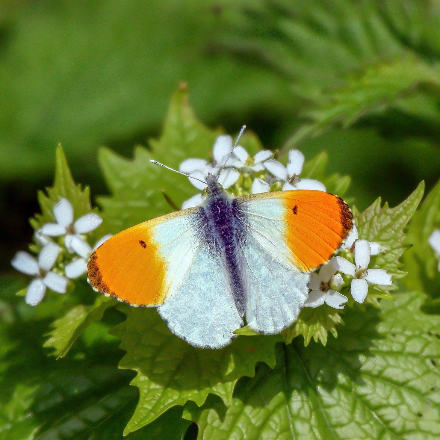 butterfly-4119422_1920