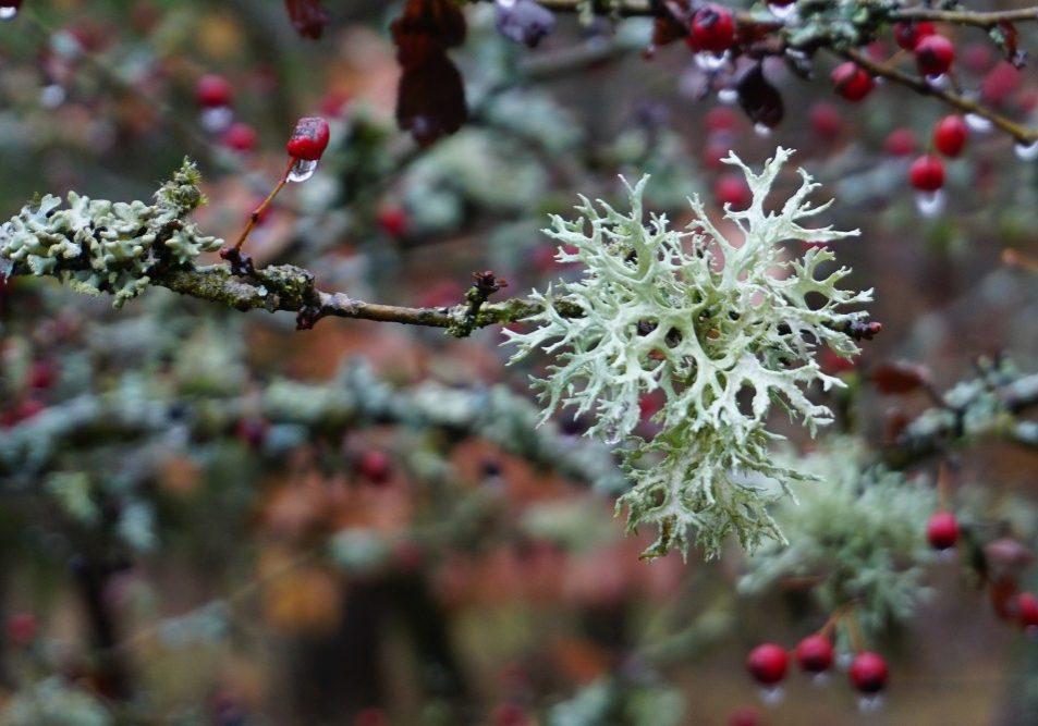 lichen-3881304_1920